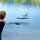 How Skipping Rocks and the Magic Move…